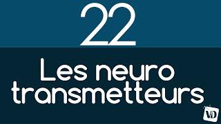 Vignette de Les 6 principaux neurotransmetteurs