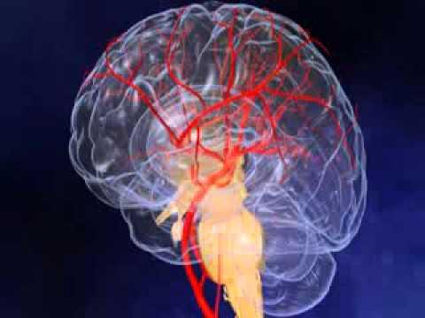 Une forte baisse de la pression artérielle lors de la prise dalcool