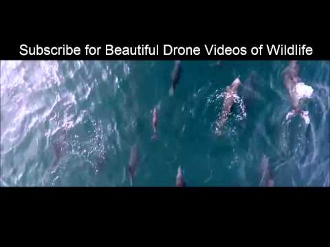 Amazing Sea Life by Drone