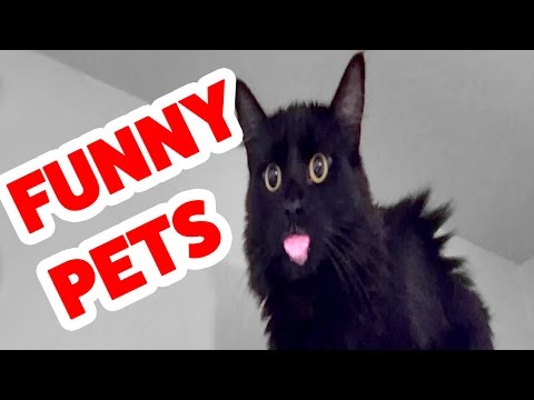 Funniest Home Video Pet Reaction Bloopers of 2016 | Funny Pet Videos