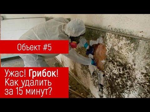 Gribok der Nägel die ukrainischen Salben