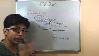 TATA box
