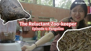 Pangolin vs Human - [The Reluctant Zookeeper Ep4]