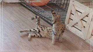 มาดูสัตว์น่ารักๆ ที่ร้านสารพัดสัตว์เลี้ยง Animal Cafe