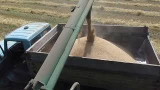Пусть пичужки летят сюда клевать зерно
