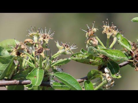 Nők papilloma vírus tünetei