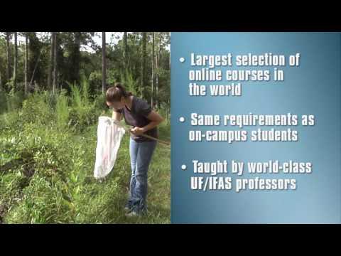 UF Entomology Online Studies - YouTube
