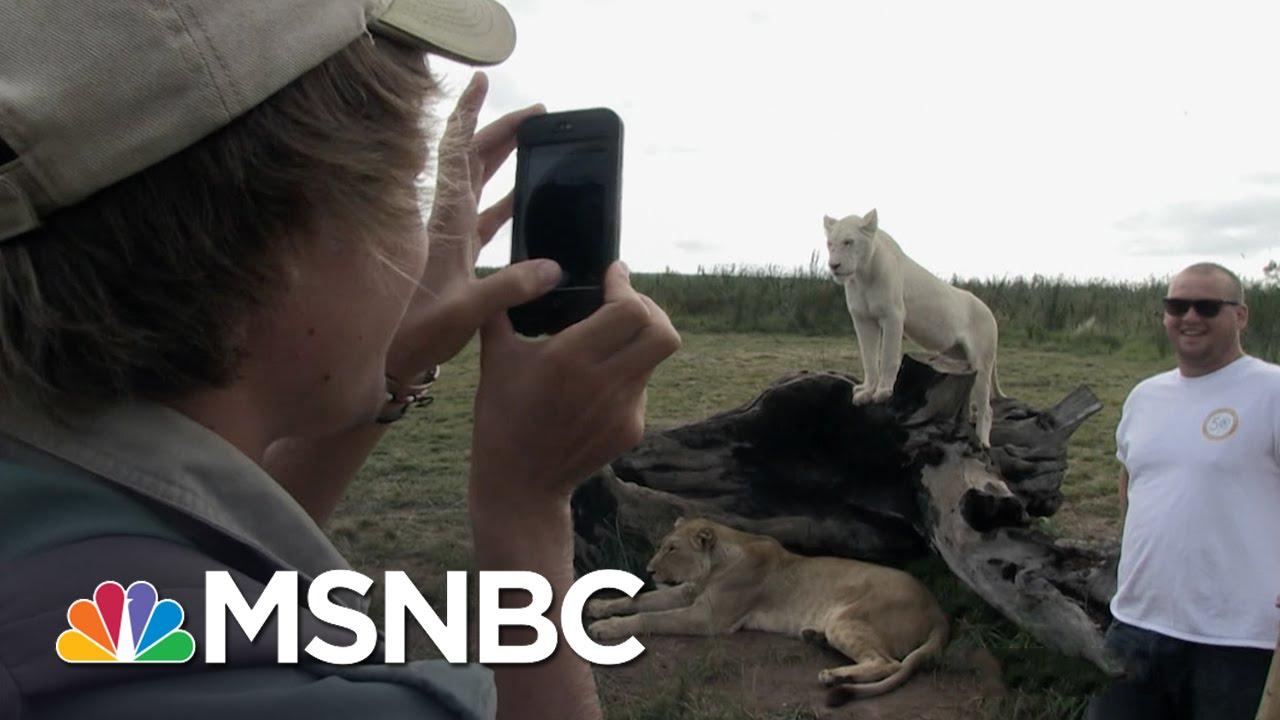 'Blood Lions' Web Extra: Volunteering | MSNBC thumbnail