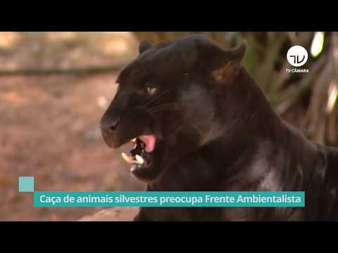 FP Ambientalista debate contra caça silvestre - 01/07/20