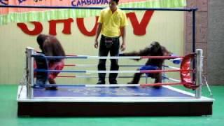 Orangutan Boxing