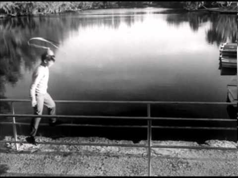 CUELLO – Mosquetero débil cisne