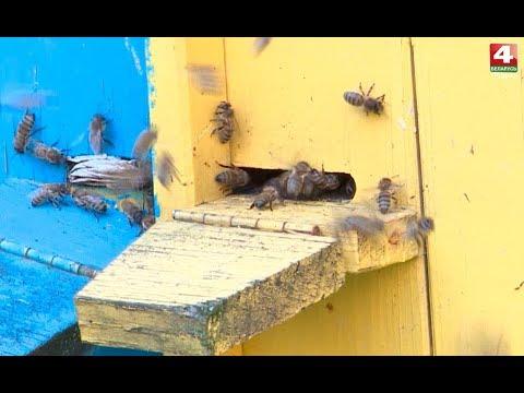Просто утро. Музей пчеловодства. 14.08.2017