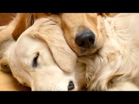 Pet Therapy: Sleep Music For Dogs And Cats