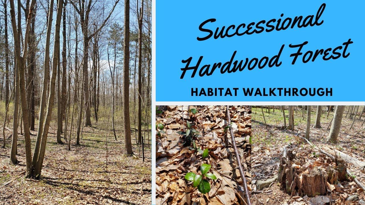 Habitats: Successional Hardwood Forest