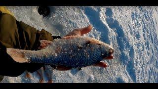 Ловля зимой рыбы на дону