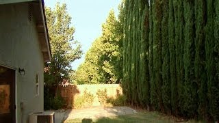 Italian Cypress Adds Privacy