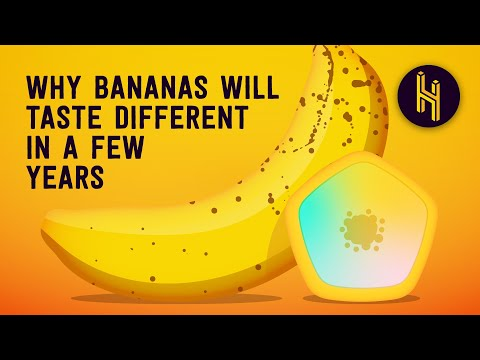 Bananas are Coming to an End