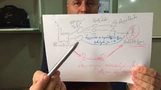 რა არის ქსელური მარკეტინგი და რა არის პირამიდა? #Business Media Georgia