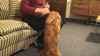 How Hearing Dogs for Deaf People trains hearing dogs to help deaf people