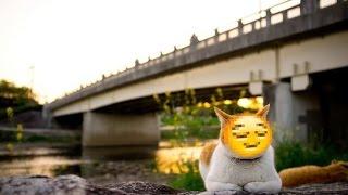 Смешные кошки :)  Часть 236 - Ванные процедуры:))