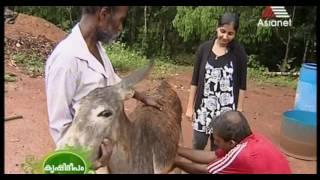 Krishideepam Videos - Bapse com