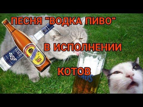 Песня ВОДКА ПИВО - В ИСПОЛНЕНИИ КОТОВ