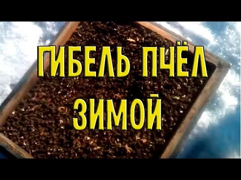 Ошибки Пчеловода!| Анализ погибших семей зимой 12.02.2017