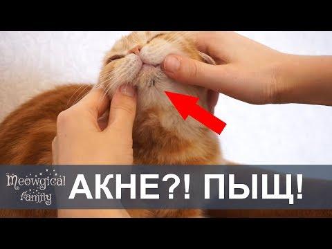 Часть1:АКНЕ у кошки - черные точки на подбородке кошки