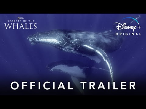 Secrets of the Whales explores language, social structure of giants of the deep
