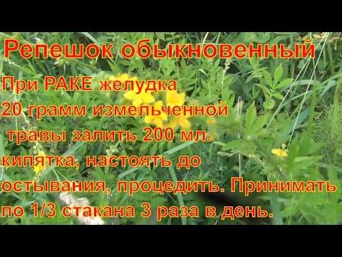 Репешок обыкновенный лечит Рак желудка Лекарственные травы и растения