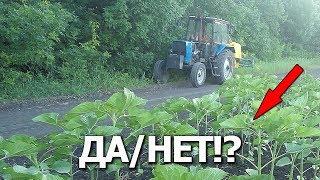 ➥Подкормки по листу да/нет!? Выращиваем подсолнухи #СельхозТехника ТВ