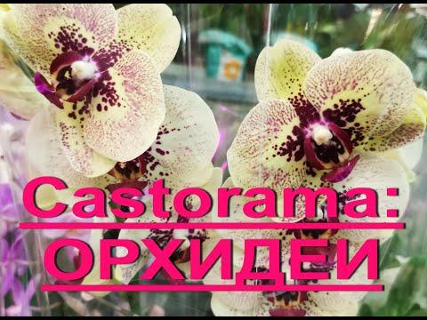 """ЗАВОЗ ОРХИДЕЙ в """"Castorama"""",18.06.20.Встретила мильтонию """"Сансет"""",а """"Сансет Лав"""" - это фаленопсис :)"""
