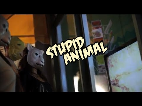 """Stupid Animal"" by The Jelly Project - Official Music Video"