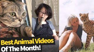 animales Animales cómicas Agosto 2019