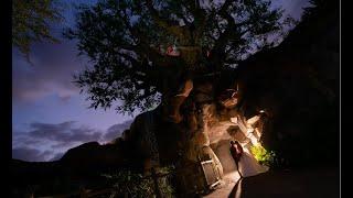 Our Disneys Animal Kingdom Fairytale Wedding | Tree Of Life Ceremony, Tiffins Reception And Mickey