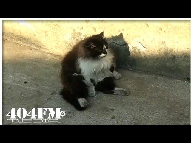 Кот неудачник даст совет