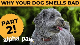 Why Your Dog Smells Bad, Part 2!