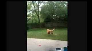Meet Cassie The Protandim Dog