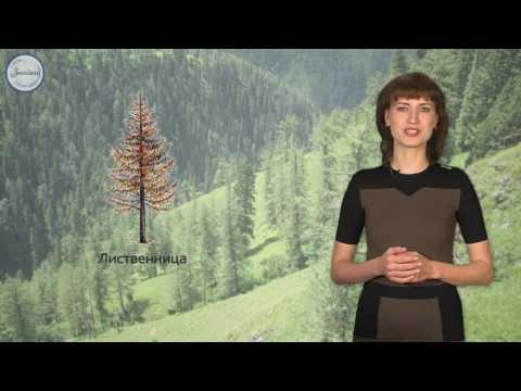 Лесные сообщества
