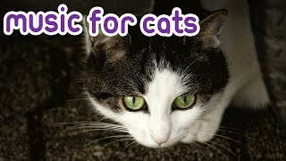How to Relax My Cat? Cat Therapy Music! Chillout your Kitten!