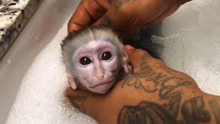 Baby Monkey taking a bath