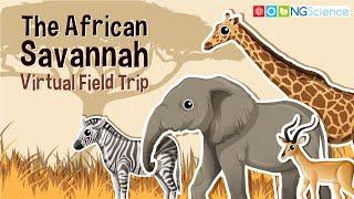 The African Savannah – Virtual Field Trip