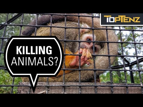 10 Reasons Zoos Are Bad for the Planet