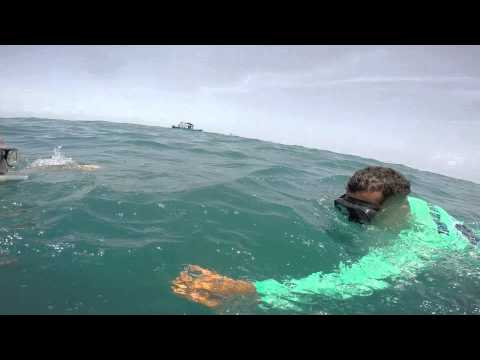 Swimming with Whale Sharks off Isla Holbox 2