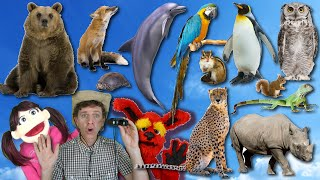 What Do You See? Song| Wild Animals Part 2 | Learn English Kids