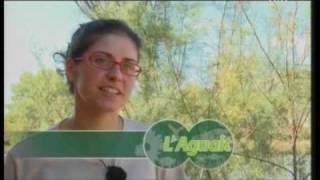 preview picture of video 'Centre de Turisme Ornitològic de la Gola (Port de Pollença)'