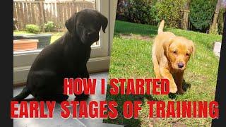 Gun-Dog Fundamentals. How to start your Labrador Retriever Gundog training.