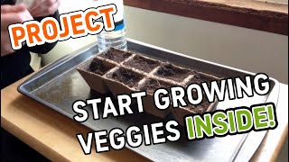 PROJECT | Start growing vegetables inside your home!