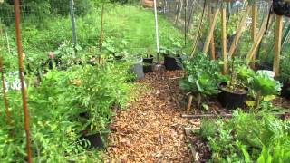 My Community Garden Plot Episode 7: Airflow Pruning, Hand Sprayers & Side Dressing with Lime