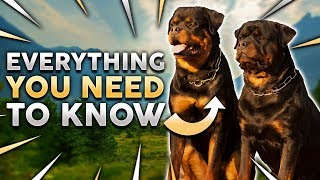 ROTTWEILER 101! Everything You Need To Know About Owning a Rottie Puppy